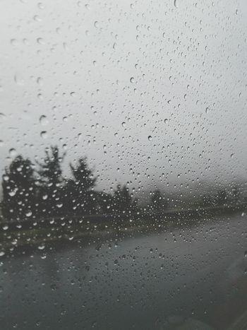 Window Wet Transparent Rain Glass - Material Close-up Water No People Backgrounds Tree Rainy Season Nature RainDrop