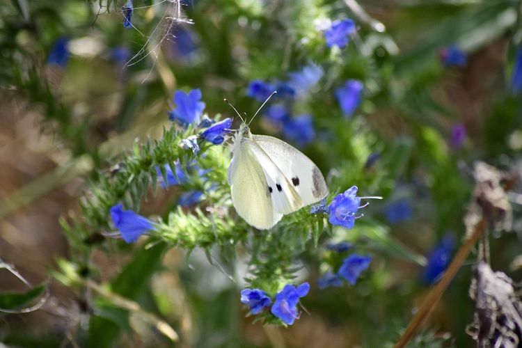 Animal Animal Themes Animal Wildlife Animal Wing Animals In The Wild Beauty In Nature Butterfly Butterfly - Insect Close-up Flower Flower Head Flowering Plant Fragility Freshness Growth Insect Invertebrate Nature No People One Animal Petal Plant Pollination Purple Vulnerability