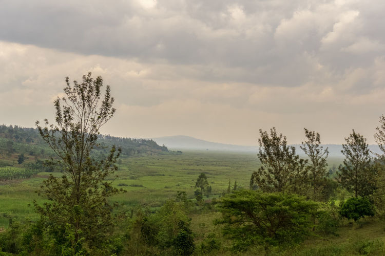 MASAKA,RWANDA - OCTOBER 21,2017: The fields This is the area outside of the small village.There are some fields,lawns and trees.It's a very green landscape out there. Rwanda Africa Beauty In Nature Day Field Growth Landscape Mountain Nature No People Outdoors Plant Scenics Sky Tranquility Tree