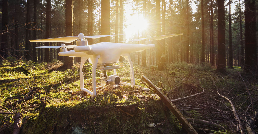 Drone On Tree Stump In Forest
