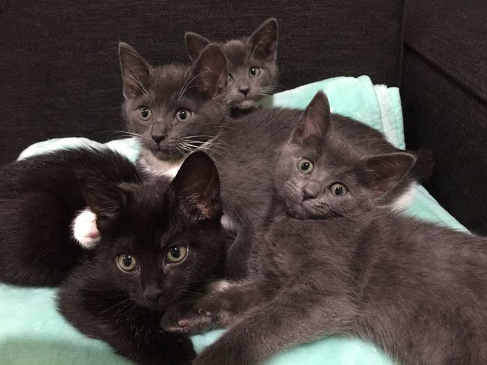 Always Be Cozy Indie s bundle of kittens. Domestic Cat Mammal Young Animal Animal Themes Kitten Domestic Animals Pets Feline Cat Togetherness Indoors  No People Day Kittens Kittens Of Eyeem Kittensnuggles Cuddles