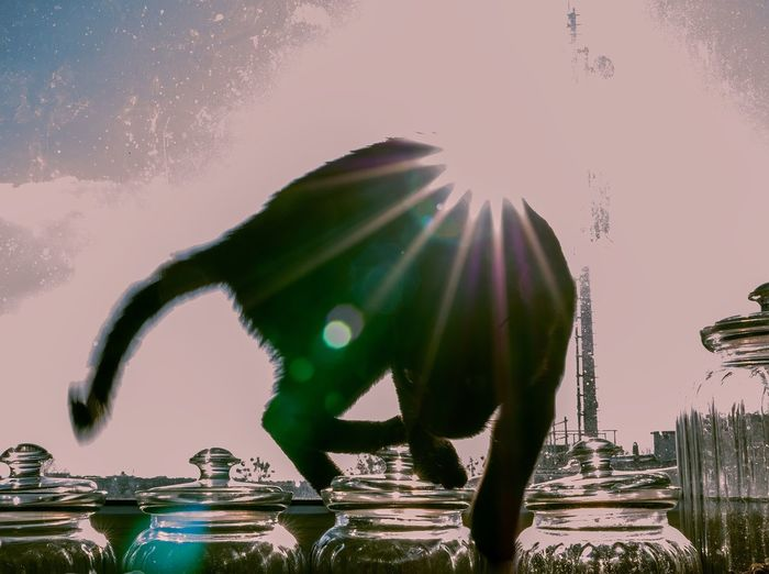 Happy People Postcard Happy Buy Postcards Cat Sky One Person Nature Full Length Water Adult Standing Sunlight Clear Sky Digital Composite Silhouette Lens Flare Men City Architecture Outdoors Environment Real People Contemplation