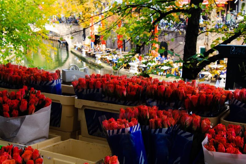 variation of red tulips in front of water canal in Utrecht Flowers Nature Garden City Flower Tree Market Utrecht Red Canal Tulips Plant Netherlands Growth Fragility Freshness Beauty In Nature No People Flowering Plant Large Group Of Objects Multi Colored Variation Tulip Choice Bouquet