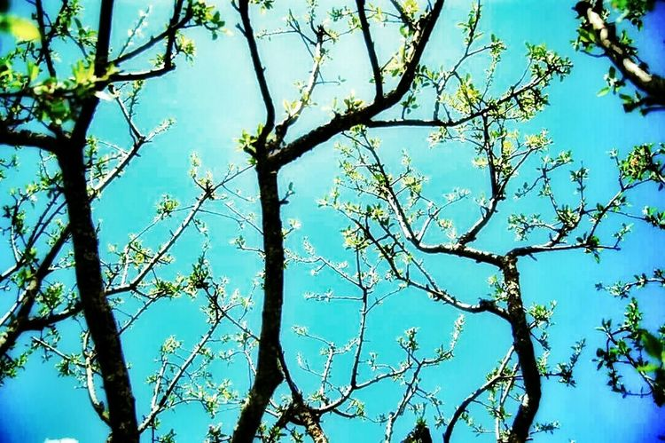 Trees Turquoise Sky EyeEm Nature Lover Nature Life In Colors Green Sunshine Beauty Light And Shadow