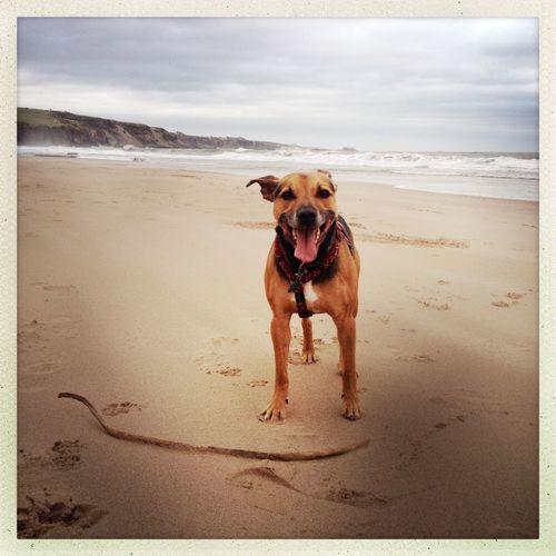 Sound Of Life Beach Staffie