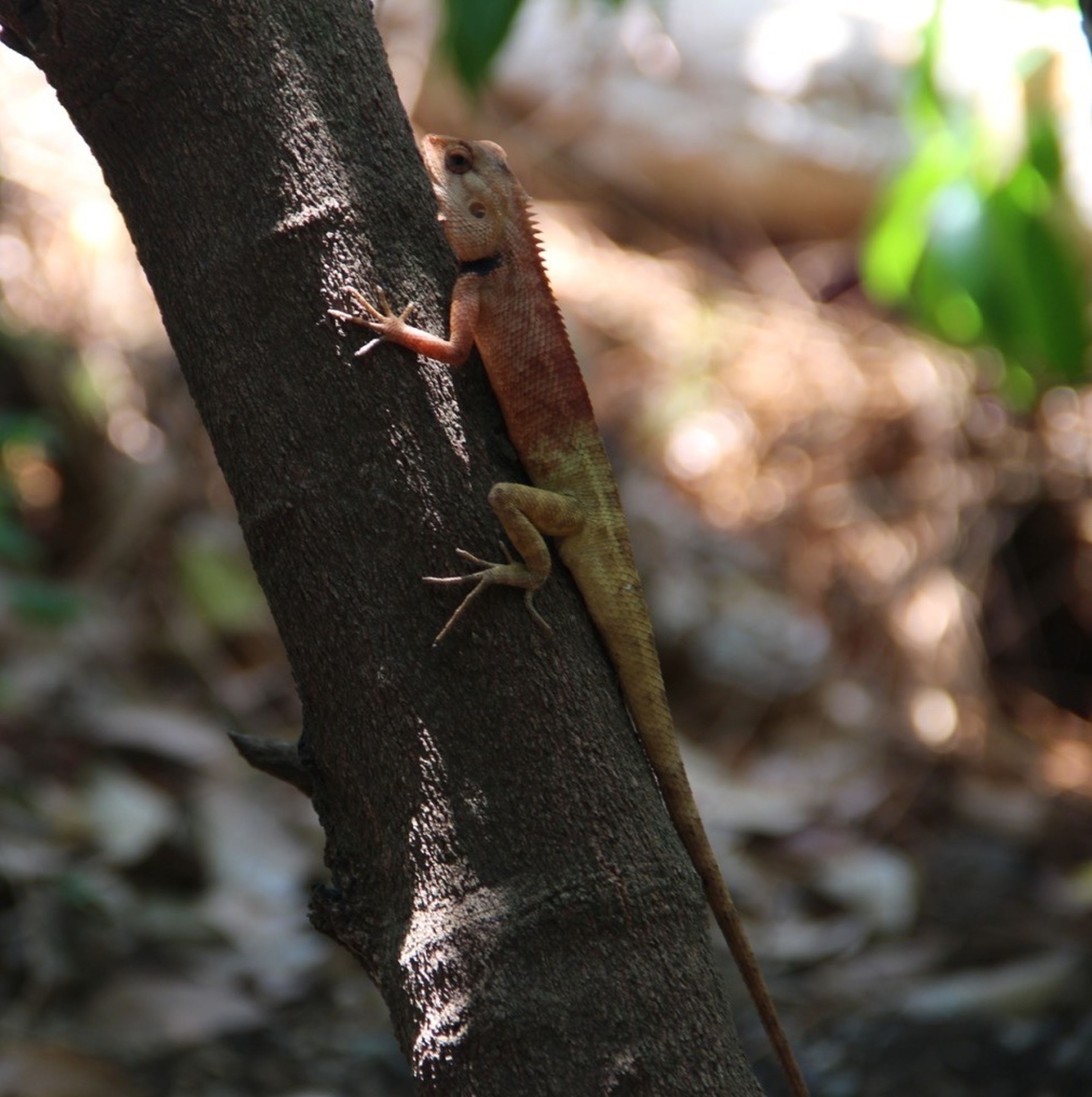 animals in the wild, one animal, animal themes, wildlife, lizard, focus on foreground, reptile, close-up, selective focus, tree trunk, insect, nature, outdoors, day, leaf, tree, no people, branch, rock - object, green color