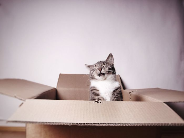 Funny cat with eyes closed in cardboard box against wall