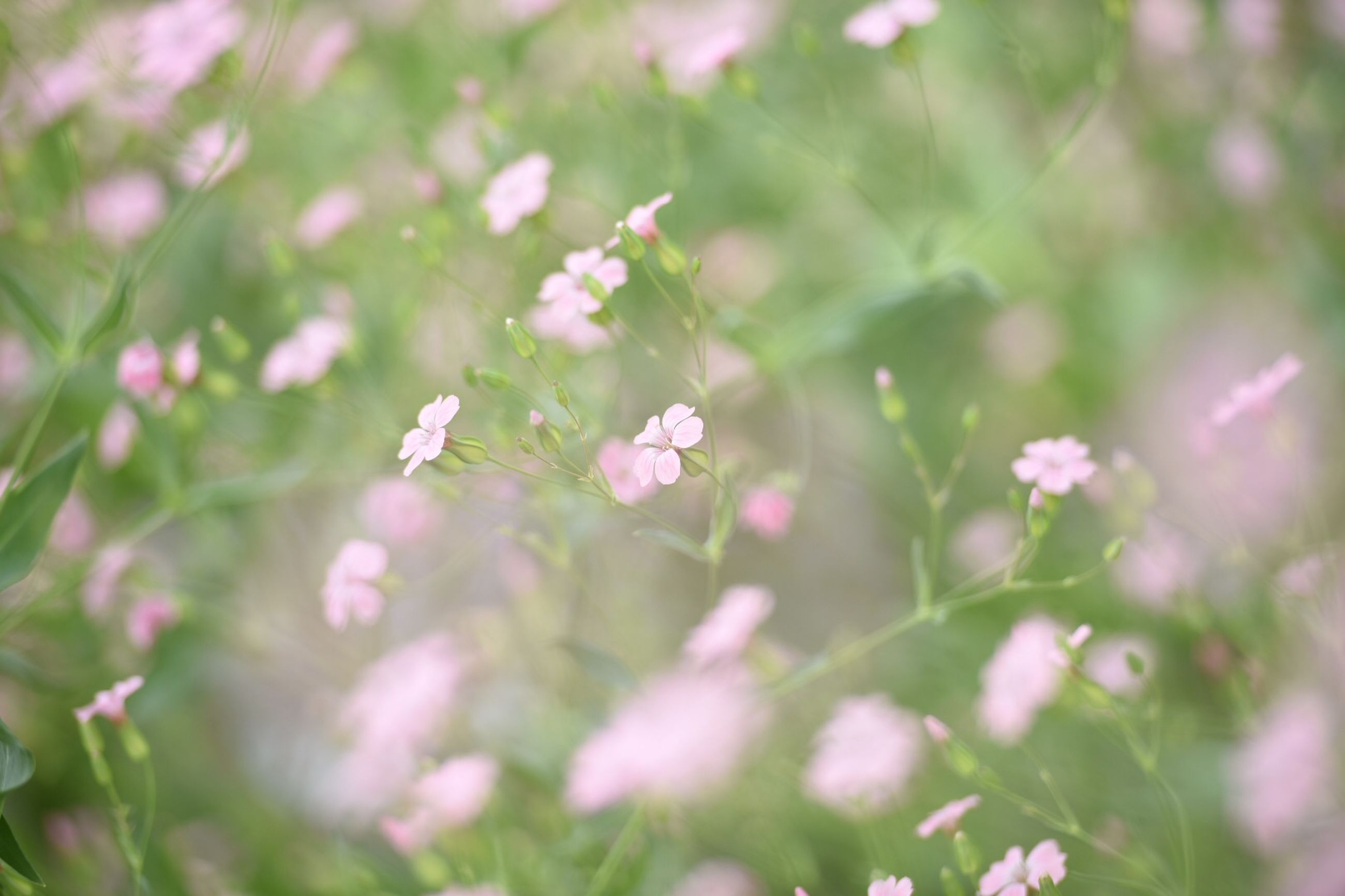 flower, growth, freshness, fragility, beauty in nature, plant, petal, nature, blooming, focus on foreground, selective focus, close-up, flower head, animal themes, one animal, pink color, outdoors, day, in bloom, stem