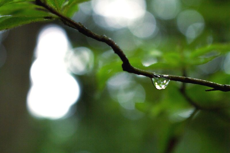 Nature Day No People Focus On Foreground Leaf Drop Growth Beauty In Nature Outdoors Close-up Water Branch Plant Freshness Fragility Tree Architecture OpenEdit EyeEm Best Shots Backgrounds