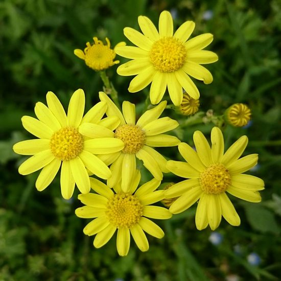 Yellow Yellow Flower Yellow Flowers Gelb Yellow Yellow Yellow Gelbe Blumen🌾 Gelbe Blüten🌾 Gelbe Blume Ensemble Beautiful Nature Beautiful Beautiful ♥ Hanging Out Taking Photos Check This Out Hello World Cheese! Enjoying Life Relaxing