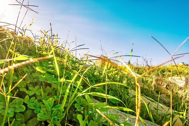 Agriculture Beauty In Nature Blue Clouds Blue Colour Clouds And Sky Cyprus Day Field Field Grass Green Color Green Grass Growth Leaf Limassol Nature No People Outdoors Plant Rural Scene Sky Sun Sun Beams Sunny Sunny Day