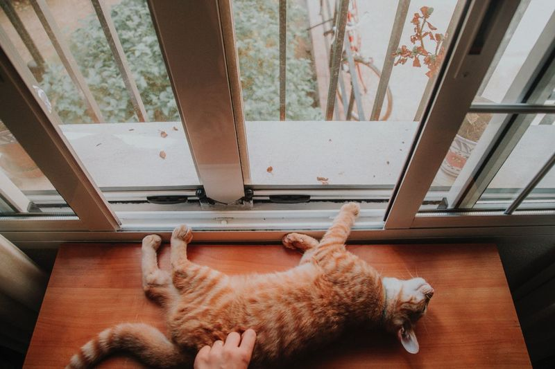 Relax Domestic Pets Animal Themes Mammal Domestic Animals One Animal Animal Vertebrate Domestic Cat Cat Indoors  Feline Window Lying Down High Angle View Home Interior Day Relaxation Resting