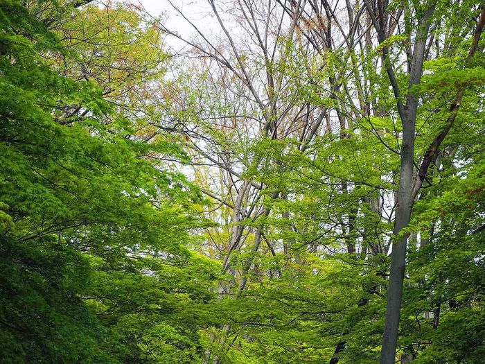 Japan VSCO 空 Vscogood Sky Skyporn Green Green Color 新緑 もみじ