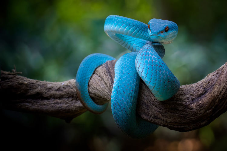 Close-up of blue snake on tree trunk