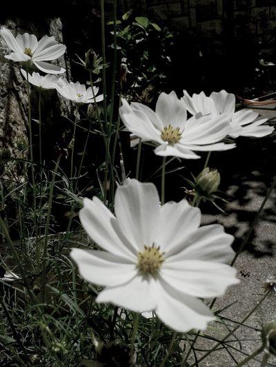 EyeEm Gallery Nature_collection Flowers,Plants & Garden EyeEm Best Shots-My World Nature_collection