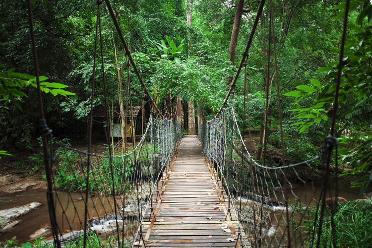 Footbridge Over River By Trees In Forest