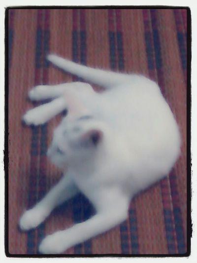 my cat.. ! Taking Photos
