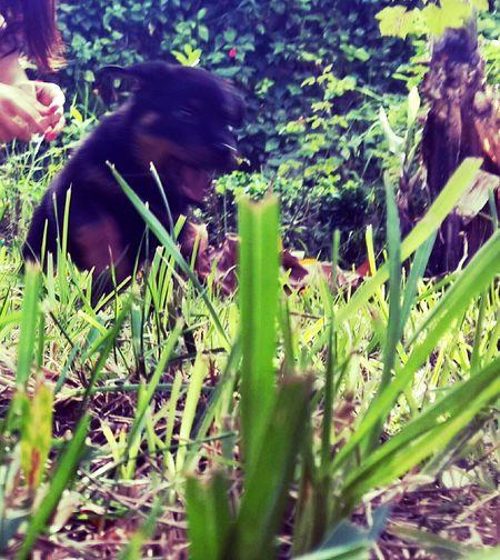 _ Gloria ♡ { My Lovely RottWeiler }