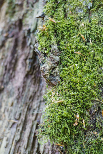 Bark Beauty In Nature Camouflage Close-up Green Color Growth Moss Plant Textured  Tree Tree Trunk Trunk