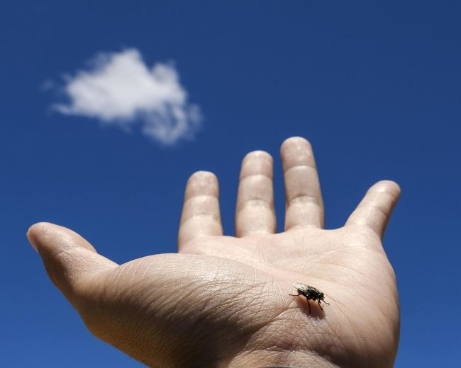 Fly friend Finger Fun Lifeisbeautiful Minimalism Fly Human Body Part Human Hand Hand Wild Animal Blue Sky Cloud Sky And Clouds Cloud - Sky Outdoor Composition Close-up Eye4photography  EyeEm Lifestyles Taking Photos Bestoftheday Fujifilm Fujifilm_xseries Low Angle View Capture Moment Ideas Enjoying Life Exploring Day
