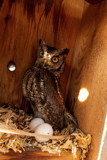 High angle view of owl in nest