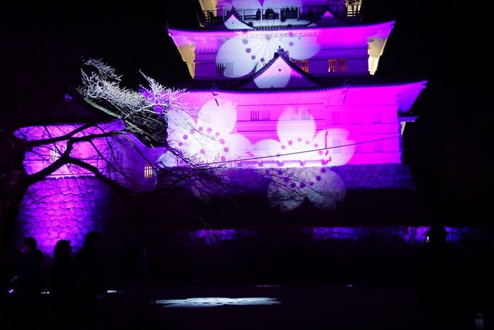 Odawara castle - winter cherry blossom illumination festival Cherry Blossom Outdoor Odawara Castle / Japan Castle Night Illuminated Arts Culture And Entertainment Performance No People Architecture