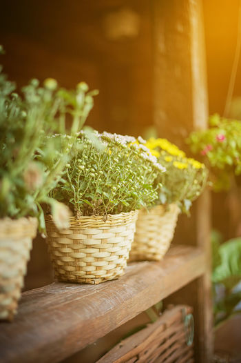 Close-up of plant in basket on table