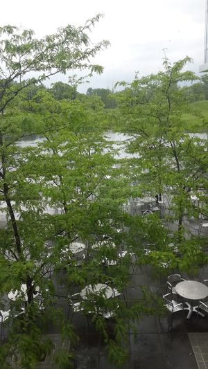Beauty In Nature Branch Day Growth Nature No People Outdoors Tranquility Tree Water