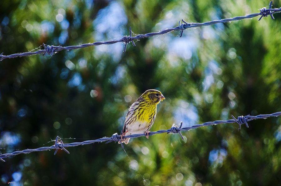 Animal Wildlife Bird Madridgrafias Taking Photos Madrid Madrid,spain Madrid ❤