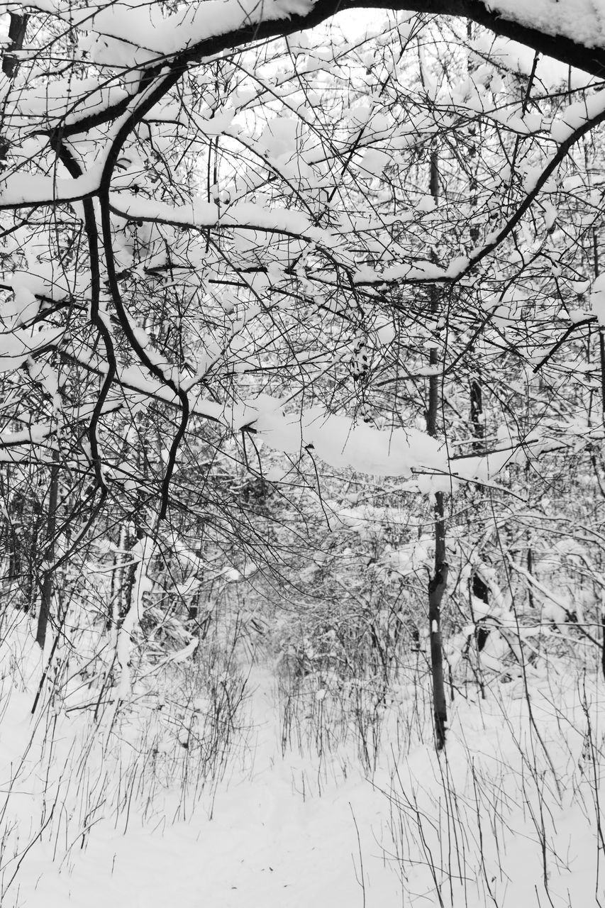 SNOW COVERED LAND AND TREES IN FOREST