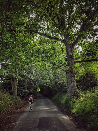 Rear view of boy riding bicycle on road amidst trees