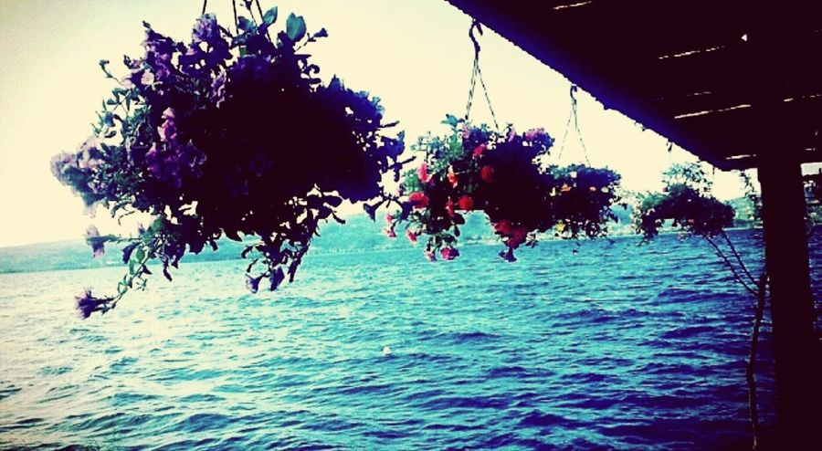 Tree Sea Water Flower Growth Nature Sunny Beauty In Nature Tranquility Vacations Tranquil Scene Waterfront Day Non-urban Scene Scenics Summer Sky Freshness Majestic Tourism