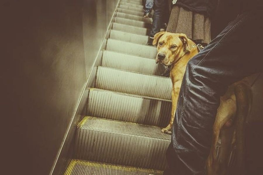 A dog and a escalator. Bagarmossen Dog Stockholm Street Photography