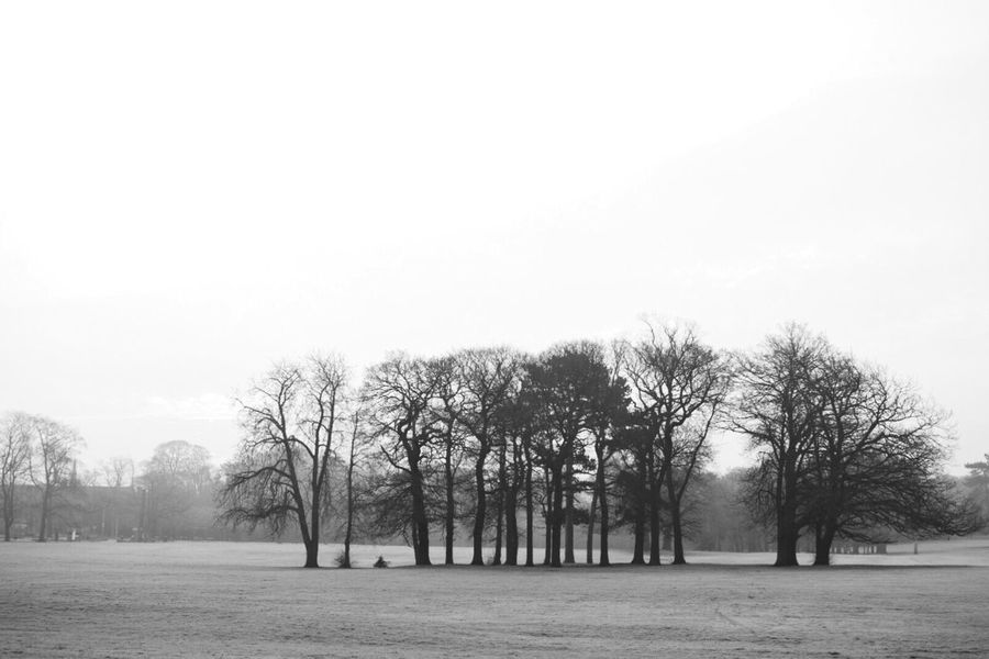 Tree Nature Tranquility Clear Sky Tranquil Scene Growth Beauty In Nature No People Bare Tree Landscape Outdoors Branch Black And White Blackandwhite Exploring Eye4photography  Taking Photos EyeEm Gallery Cold Temperature Winter Trees