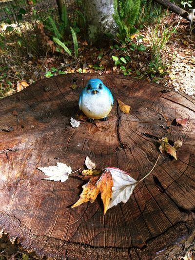 Blue Jay Kind Of Day My Backyard Leaves first eyeem photo Still Life Tree Stumps Fall Colors Fall In Florida Autumn FirstEyeEmPic Fairytales Traveling Home For The Holidays The City Light Selected For Premium Art Is Everywhere Break The Mold Lost In The Landscape EyeEm Ready