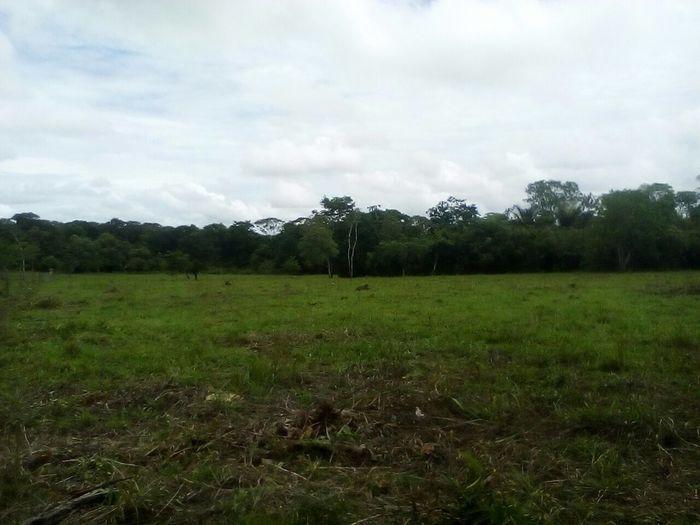 Sky Plant Land Tree Cloud - Sky Environment Landscape