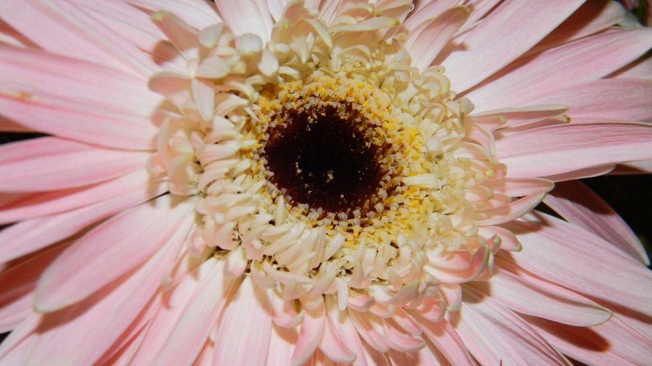 Flower Power🌼 Pastel Power