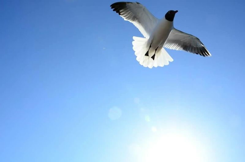 Bird Seagull Boardwalk Ocean City Nj  Look Up Fly Flying Bird Sky Sunbeam