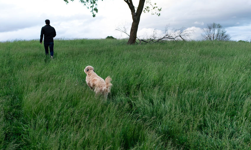 Rear view of dog standing on field against sky