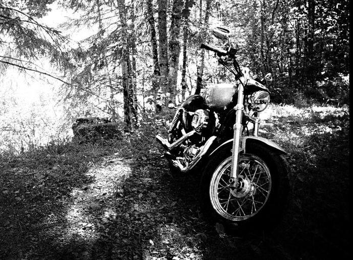 Harley Davidson Black And White 1200C in Alp's Kanton Glarus Swiss