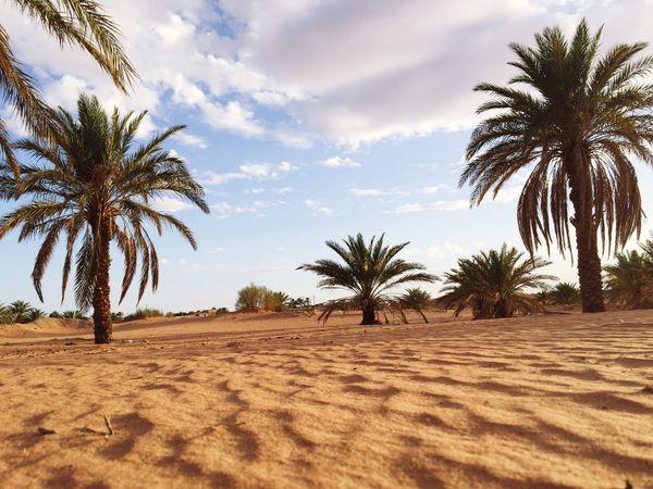 Simplicity is btfl Hello World Sahara Desert Ouargla