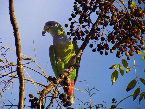 In my street. Nature On Your Doorstep Bird Bird Photography EyeEm Birds Birdwatching Birds_collection Nature_collection EyeEm Nature Lover Parrot Eating