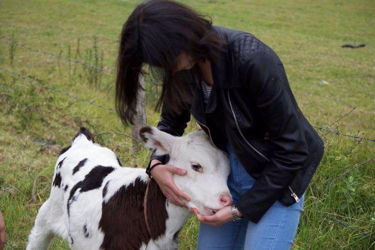 Countryside ThatsMe Animal Love Cow Nature Animal