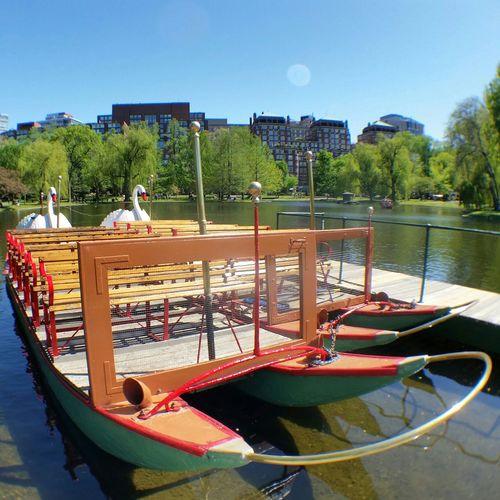 Swan boats Swan Boats Boston Public Garden  Boston Massachusetts Boston, Massachusetts Parks Landmarks Historic