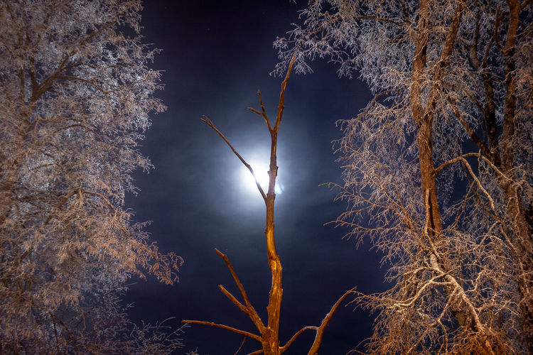 Moon Night Tree