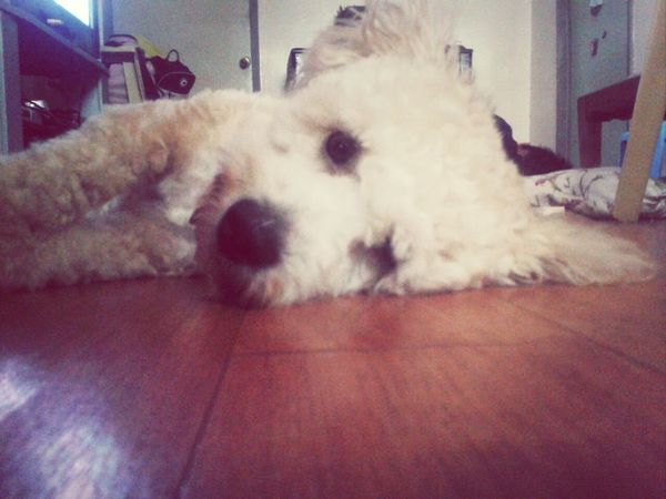 good morning willow :3 Dog I Love My Dog Perfekt Day Hey Willow
