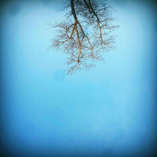Skyporn TreePorn Blue Sky Upside Down