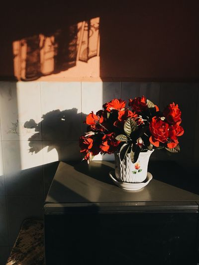 Moody Flowers Roses IPhone Melancoly Mood Shadows Flower Vase Indoors  Home Interior Flower Arrangement No People Bouquet Nature Table Day Flower Head Fragility Home Showcase Interior