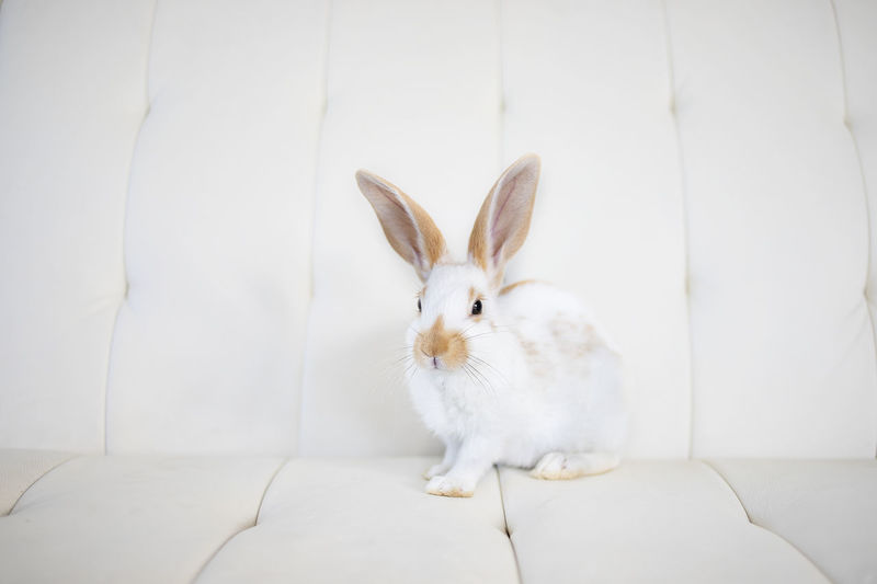 Clise up of awhite bunny