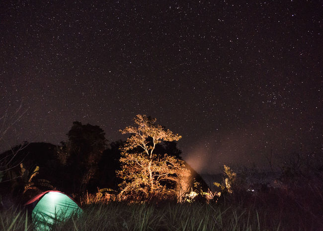 Camp ground TheGreatOutdoors Nightphotography Long Exposure Astronomy Galaxy Star - Space Illuminated Tree Constellation Star Trail Space Christmas Decoration Glitter Tree Topper